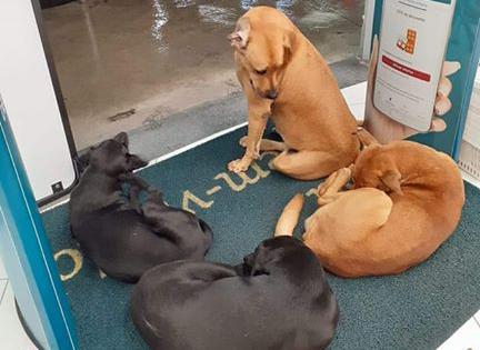 Tropa de Idealistas resgata cães que estão sendo levados de Ibiúna para São Roque